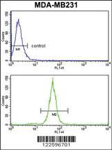 Anti-TGOLN2 Rabbit Polyclonal Antibody