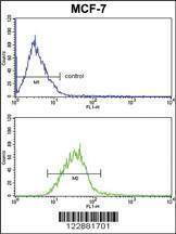 Anti-PIN1 Rabbit Polyclonal Antibody