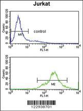 Anti-ELAVL1 Rabbit Polyclonal Antibody