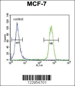 Anti-CDC37 Rabbit Polyclonal Antibody