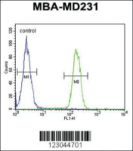 Anti-ARG1 Rabbit Polyclonal Antibody