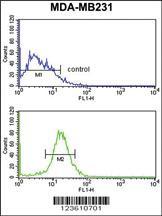Anti-NKX3-1 Rabbit Polyclonal Antibody