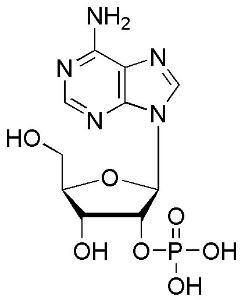 Adenosine-2'-monophosphate ≥97%, Powder