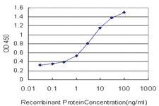 Anti-YAP1 Mouse Monoclonal Antibody [clone: 2C2]