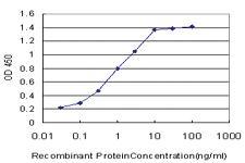 Anti-YAP1 Mouse Monoclonal Antibody [clone: 2H1]