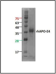 ApoE4, human recombinant, BioVision