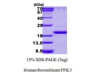 Human Recombinant PPIL3, BioVision