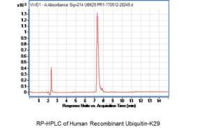 Human Recombinant Ubiquitin-K29, BioVision