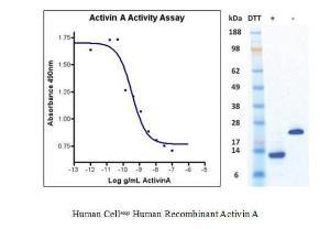 Human CellExp™ Activin A, Human Recombinant, BioVision