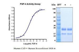 Human CellExp™ FGF-4, Human Recombinant, BioVision