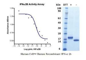 Human CellExp™ IFN-alpha 2b, Human Recombinant, BioVision