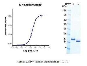 Human CellExp™ IL-10, Human Recombinant, BioVision