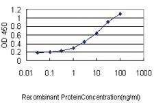 Anti-BAIAP2 Mouse Monoclonal Antibody [clone: 3F3-2D3]