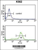 Anti-CDK5RAP1 Rabbit Polyclonal Antibody
