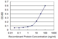 Anti-MERTK Mouse Monoclonal Antibody [clone: 2D2]