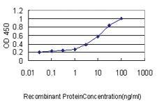 Anti-GLMN Mouse Monoclonal Antibody [clone: 1C12]