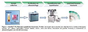 ExoStd™ Lyophilized Exosome Standard, 100 µg, Human Urine, BioVision Inc