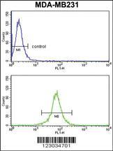 Anti-KIR2DL4 Rabbit Polyclonal Antibody