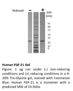 Animal-Free Human FGF-21