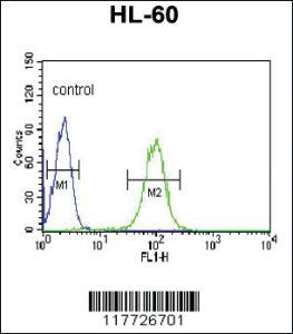 Anti-BPI Rabbit Polyclonal Antibody