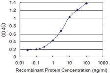 Anti-SYNCRIP Mouse Monoclonal Antibody [clone: 20000000000]