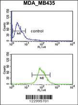 Anti-NRP1 Rabbit Polyclonal Antibody
