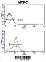 Anti-HMGA1 Rabbit Polyclonal Antibody