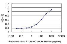 Anti-NUDT5 Mouse Monoclonal Antibody [clone: 2A3]