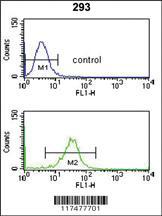 Anti-NUP153 Rabbit Polyclonal Antibody