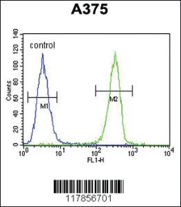 Anti-HOXA9 Rabbit Polyclonal Antibody