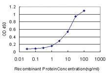 Anti-NISCH Mouse Monoclonal Antibody [clone: 2C8]