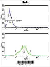 Anti-LDHA Rabbit Polyclonal Antibody