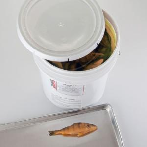 Ward's® Preserved Freshwater Perch