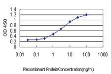 Anti-AKAP13 Mouse Monoclonal Antibody [clone: 5B7]