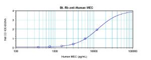 To detect hMEC by direct ELISA (using 100 ul/well antibody solution) a concentration of 0.25 – 1.0 ug/ml of this antibody is required. This biotinylated polyclonal antibody, in conjunction with compatible secondary reagents, allows the detection of at least 0.2 – 0.4 ng/well of recombinant hMEC.