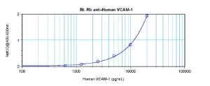 Direct ELISA: using 100 ul/well antibody solution, a concentration of 0.25 – 1.0 ug/ml of this antibody is required. This biotinylated polyclonal antibody, in conjunction with compatible secondary reagents, allows the detection of at least 0.2 – 0.4 ng/well of recombinant hVCAM-1.