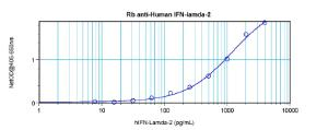 Sandwich ELISA: using 100 ul/well antibody solution, a concentration of 0.5 - 2.0 ug/ml of this antibody is required. This antibody, in conjunction with Biotinylated Anti-Human IFN-λ2 (38-172) as a detection antibody, allows the detection of at least 0.2 - 0.4 ng/well of recombinant Human IFN-λ2.