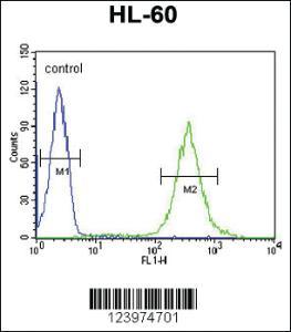 Anti-GDA Rabbit Polyclonal Antibody