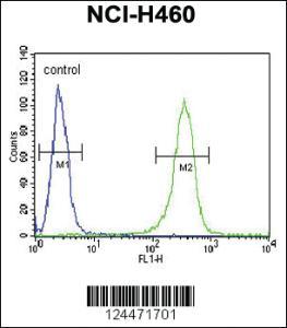 Anti-ZNF473 Rabbit Polyclonal Antibody