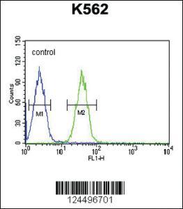 Anti-EFHC2 Rabbit Polyclonal Antibody
