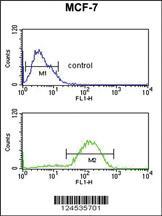 Anti-HSD11B2 Rabbit Polyclonal Antibody