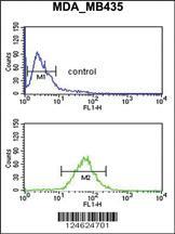 Anti-GNRH2 Rabbit Polyclonal Antibody