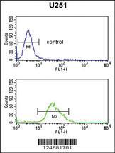 Anti-FOXG1 Rabbit Polyclonal Antibody