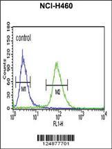 Anti-IDH3G Rabbit Polyclonal Antibody