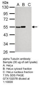 Anti-SILV Rabbit Polyclonal Antibody