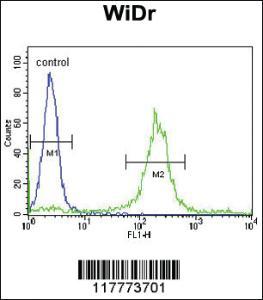 Anti-ADAM19 Rabbit Polyclonal Antibody