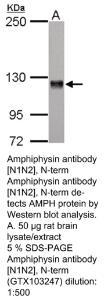 Anti-NRBP1 Rabbit Polyclonal Antibody