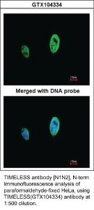 Anti-KHK Rabbit Polyclonal Antibody