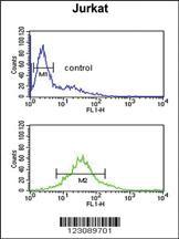 Anti-PDK2 Rabbit Polyclonal Antibody