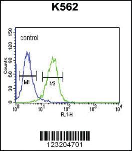 Anti-CLDN15 Rabbit Polyclonal Antibody